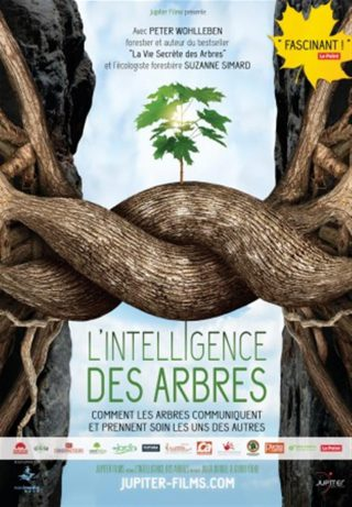 Cycle Ciné Docu : L'intelligence des arbres